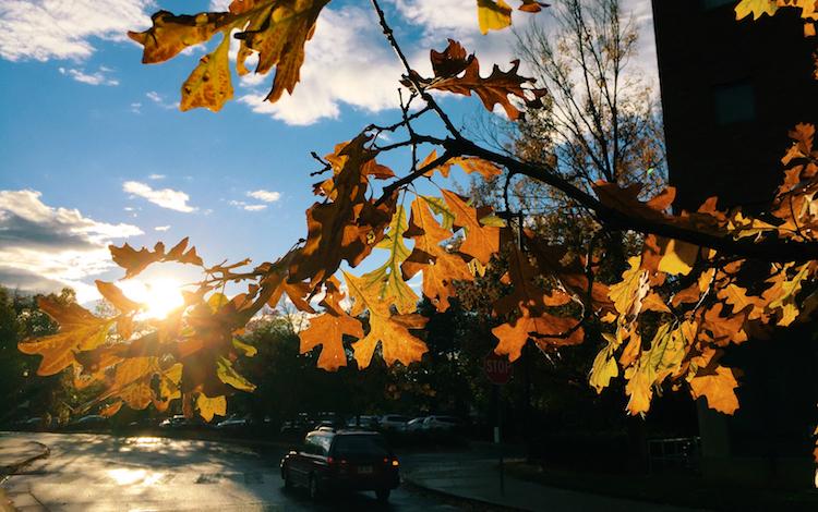 秋の花粉症対策