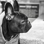 一人暮らし ペット 犬