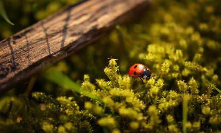 黒い小さい虫