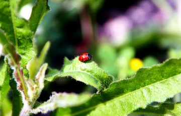 小さい赤い虫